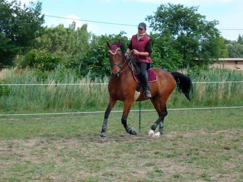 Haras-du-Nizon-centre-equestre-poney-club-equitation-manege-cours-particulier-gard-betty-jo-dressage