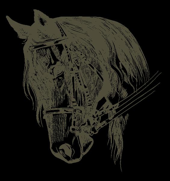 Haras-du-Nizon-centre-equestre-poney-club-equitation-manege-cours-particulier-gard-cheval
