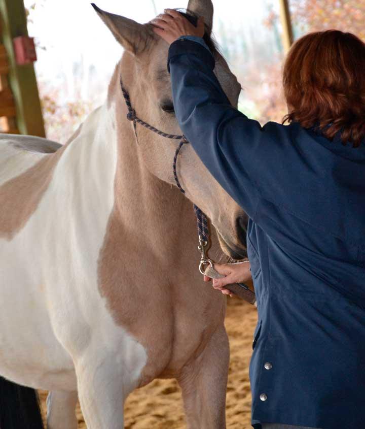 Haras-du-Nizon-centre-equestre-poney-club-equitation-manege-cours-particulier-gard-st-laurent-des-arbres-equitation-ethologique